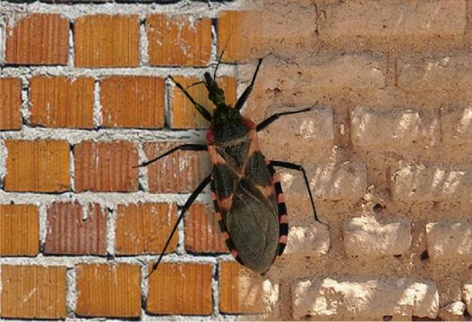 Chagas y construcción con tierra